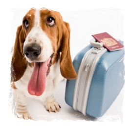 Dogs / pets are welcome at Le Grand Hotel